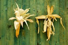 Corns Stock Images
