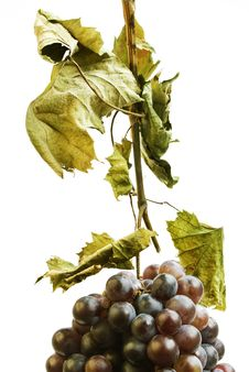 Free Red Grapes Royalty Free Stock Photography - 6533667