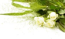 Free White Roses Royalty Free Stock Photo - 6533775