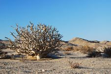 Free Desert Tree Stock Images - 6534084