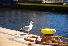 Free Seagull Into Port Stock Photo - 6534300
