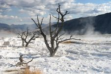 Free Mammoth Hot Springs Stock Image - 6534361