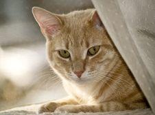 Free Hidden Kitty Stock Photo - 6534490
