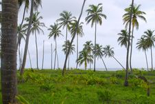 Free Tropical Forest Of Palm Trees Stock Photos - 6535233