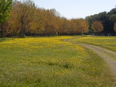 Free Path In Yellow Field Stock Photography - 6535672