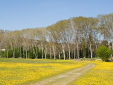 Free Path In Yellow Field Royalty Free Stock Images - 6535679