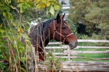 Free Quarter Horse Side View Royalty Free Stock Images - 6535739