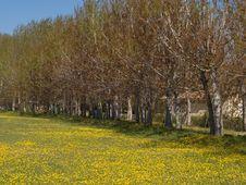 Free Yellow Field Stock Photo - 6535740