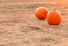 Free Two Orange Pumpkins In A Field Royalty Free Stock Images - 6536069