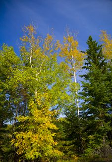 Free Yellow, Green, And Blue Sky Stock Images - 6536164