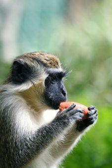 Free Monkey Royalty Free Stock Images - 6536579