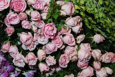 Free Pink Roses Royalty Free Stock Images - 6536719