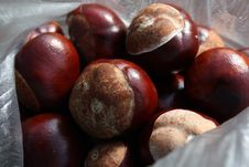 Free Bag Of Conkers Royalty Free Stock Images - 6537529