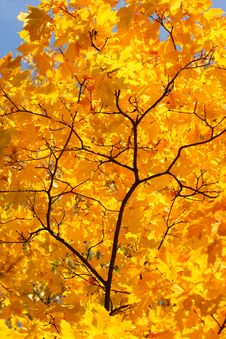 Free Autumn Yellow Branch Royalty Free Stock Images - 6538239