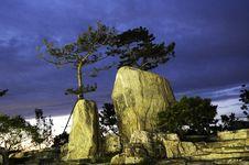 Pine Tree On The Rock Royalty Free Stock Photos