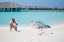 Free Photographer Shooting Bird Stock Photography - 65341492
