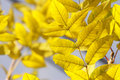 Free Yellow Autumn Leaves Stock Photography - 6540922