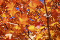 Free Autumn Leaves Stock Images - 6541044