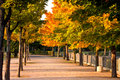 Free Colorful Autumnal Trees In The Park With Footpath Royalty Free Stock Photos - 6541058