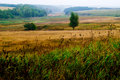 Free Meadow With Tree Royalty Free Stock Photo - 6549025