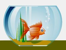 Free Goldfish Stock Images - 6540064