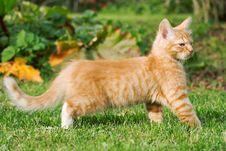 Free Walking Little Kitten Stock Photos - 6540163