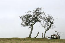 Free Skeleton Tree Stock Photo - 6540940