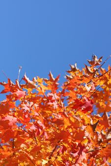 Free Autumn Leaves Royalty Free Stock Images - 6541009