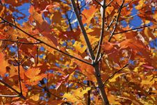 Free Autumn Leaves Stock Images - 6541024