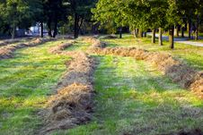 Free Freshly Mown Hay In Autumn.Rural Scene Stock Photo - 6541100