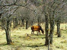 Free Horse Stock Photos - 6541593