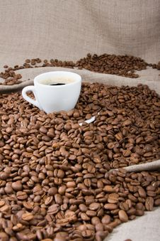 Free Cup Of Coffee Stock Photo - 6541950