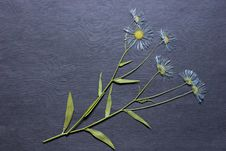 Free The Dried Flowers For A Herbarium. Royalty Free Stock Photos - 6542798
