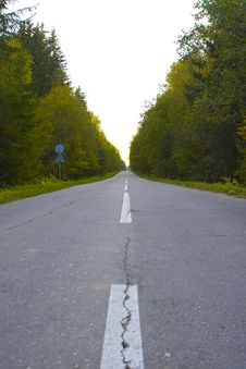 Free Road In Forest Royalty Free Stock Photo - 6543045