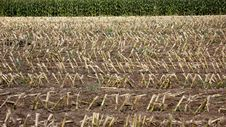 Free Agriculture Stock Images - 6543414