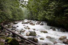 Free Rocky River With Curved Tree Stock Photo - 6543480
