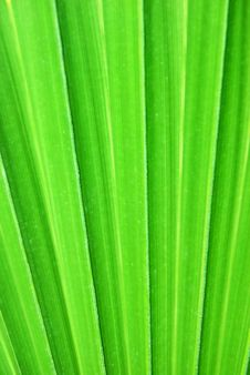 Free Palm Leaf Royalty Free Stock Image - 6543606