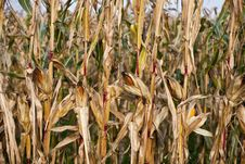 Free Colors Of Harvest Stock Photos - 6544013
