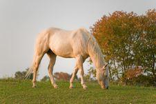 Free Horse Stock Photography - 6544922