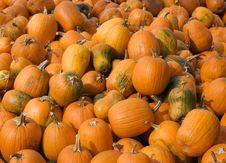 Free Pumpkins Stock Images - 6544994