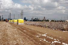 Free Cotton Royalty Free Stock Photos - 6545188