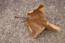Free Leaf With Concrete Background Stock Photography - 6545212