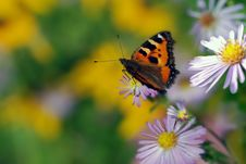 Free Butterfly Royalty Free Stock Photo - 6545465