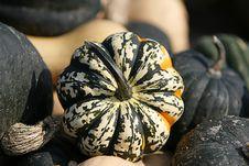Free Gourd Royalty Free Stock Photos - 6545508