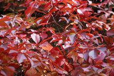 Free Autumn Leaves Royalty Free Stock Photo - 6545615
