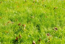 Free Fresh Autumn Grass Royalty Free Stock Image - 6545636