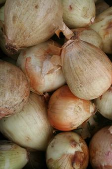 Free Stinky Onions Royalty Free Stock Photo - 6545795