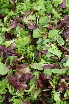 Free Mixed Leaves Stock Image - 6545821