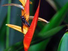 Free Bee Stock Photos - 6546153