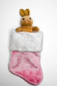 Free Bunny In Pink Stocking Stock Photo - 6546250
